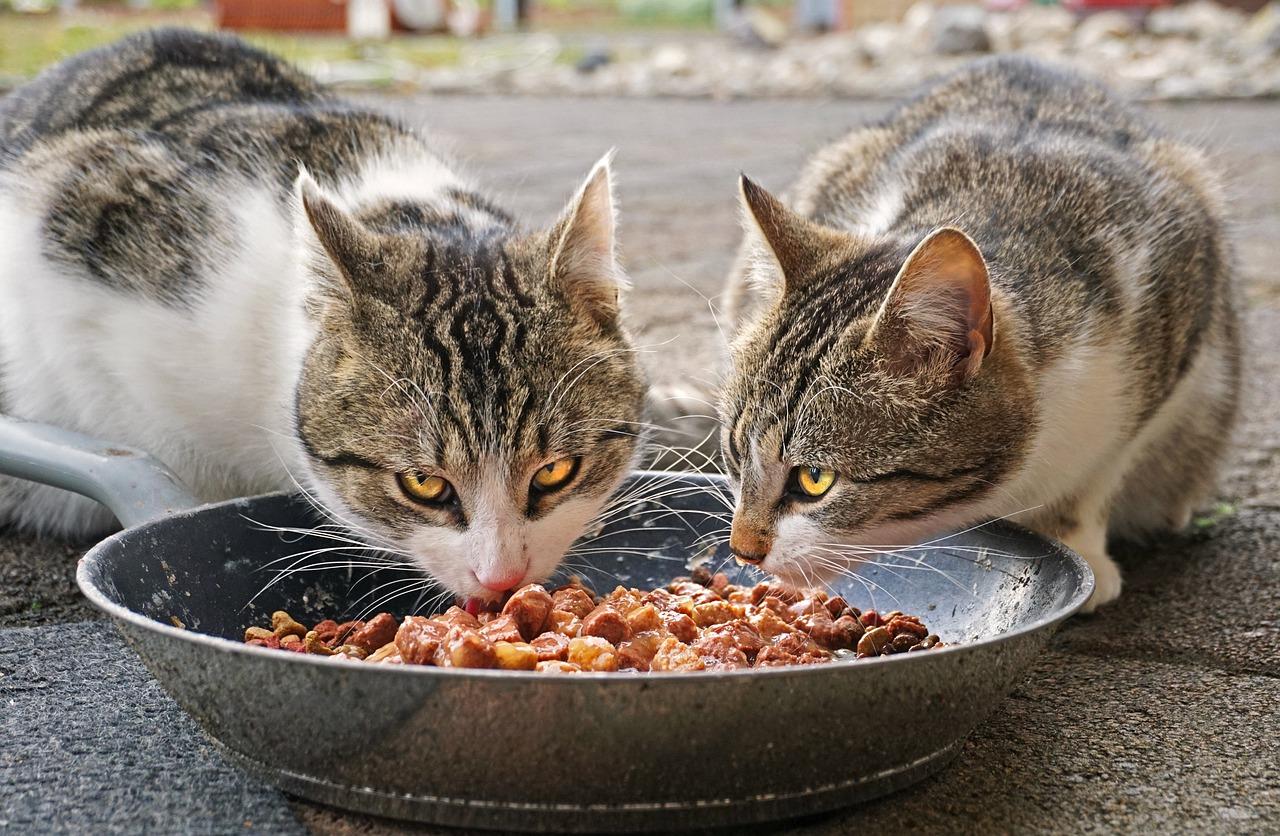 Zdrowe karmy dla kotów
