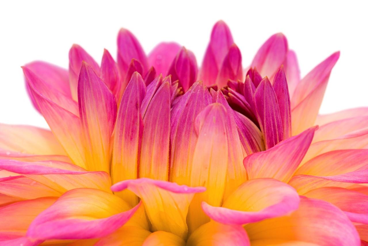Na jakie okazje pasują sztuczne kwiaty?